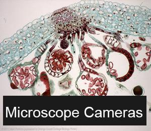 Microscope Cameras